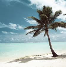 Island with palm tree